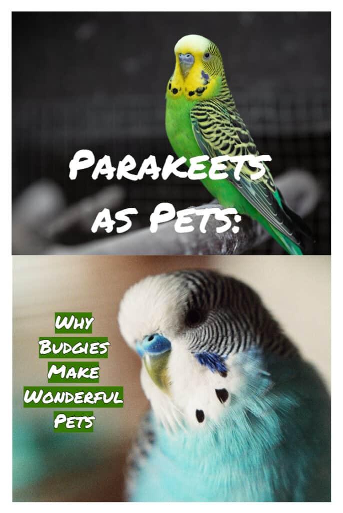 Parakeets As Pets