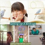 Setting Up A Birdcage: A Complete Guide For Your Bird's Home