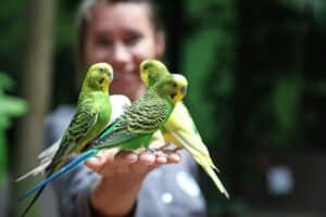 Is A Pet Parakeet Good For A Child? Best Pet Advice For Kids