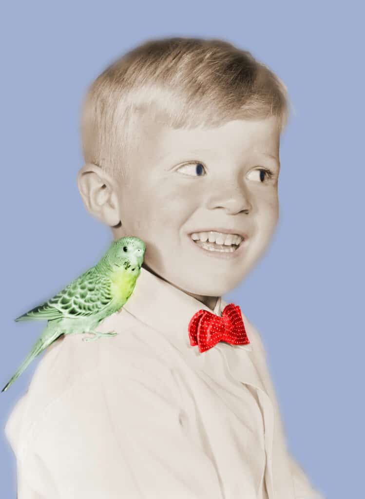 Is A Pet Parakeet Good For A Child? Best Pet Advise For Kids