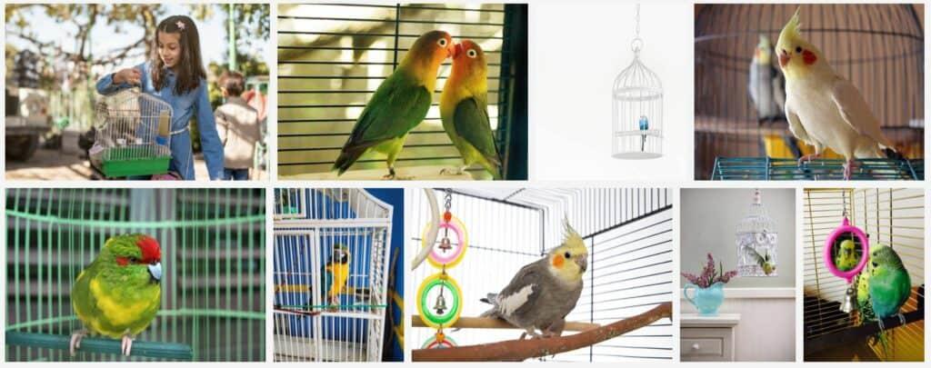 birdcage setups