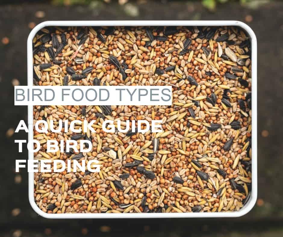 bird food types different seeds