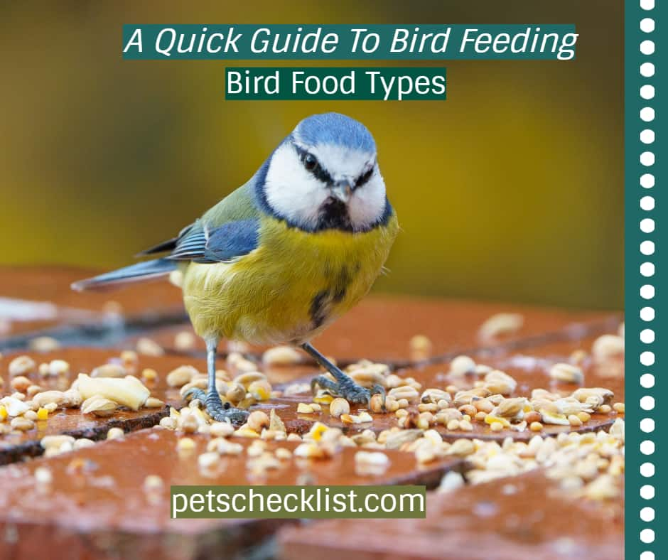 Bird Food Types: A Quick Guide To Bird Feeding
