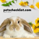 Can Rabbits Eat Dandelions? Facts, Signs, Details With Pictures