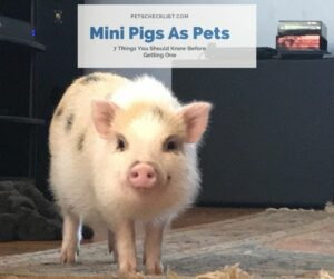 Mini Pig Pets: 7 Things You Should Know Before Getting One