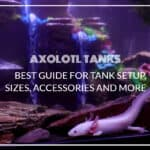 Axolotl Tanks: Best Guide for Tank Setup, Sizes, Accessories and More