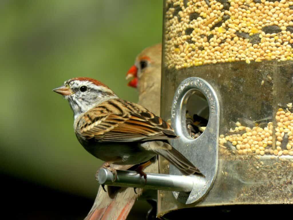bird food attracting birds