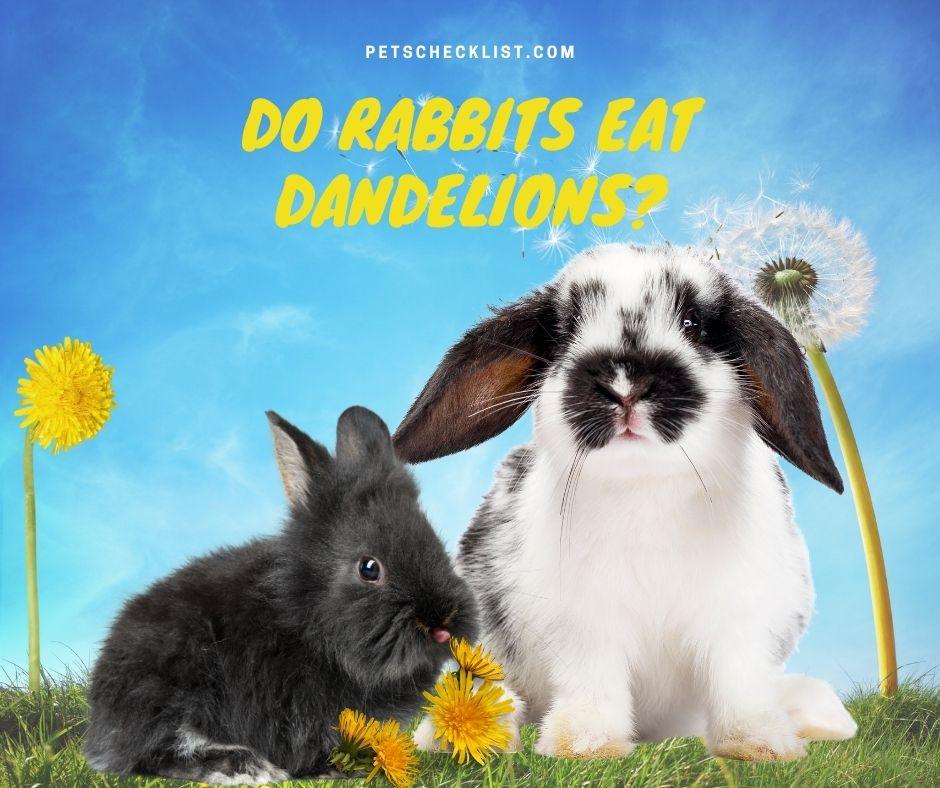 bunnies with dandelions
