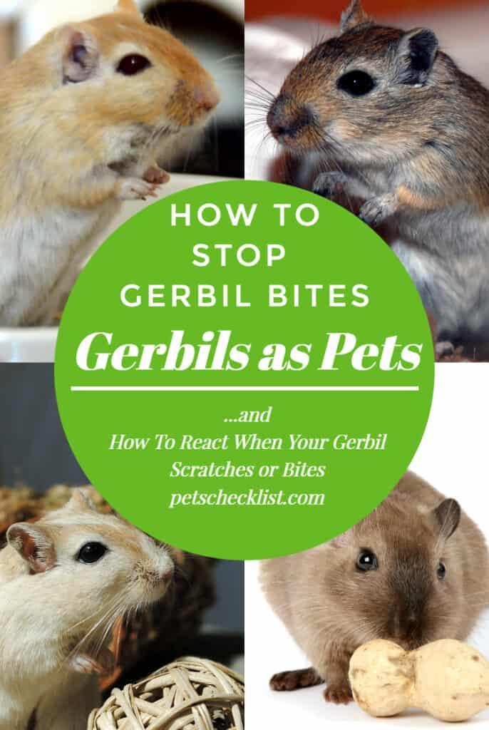 gerbil bites how to react