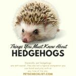 Hedgehog Facts: Important Things You Must Know Before Buying One