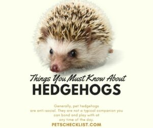 Read more about the article Hedgehog Facts: Important Things You Must Know Before Buying One
