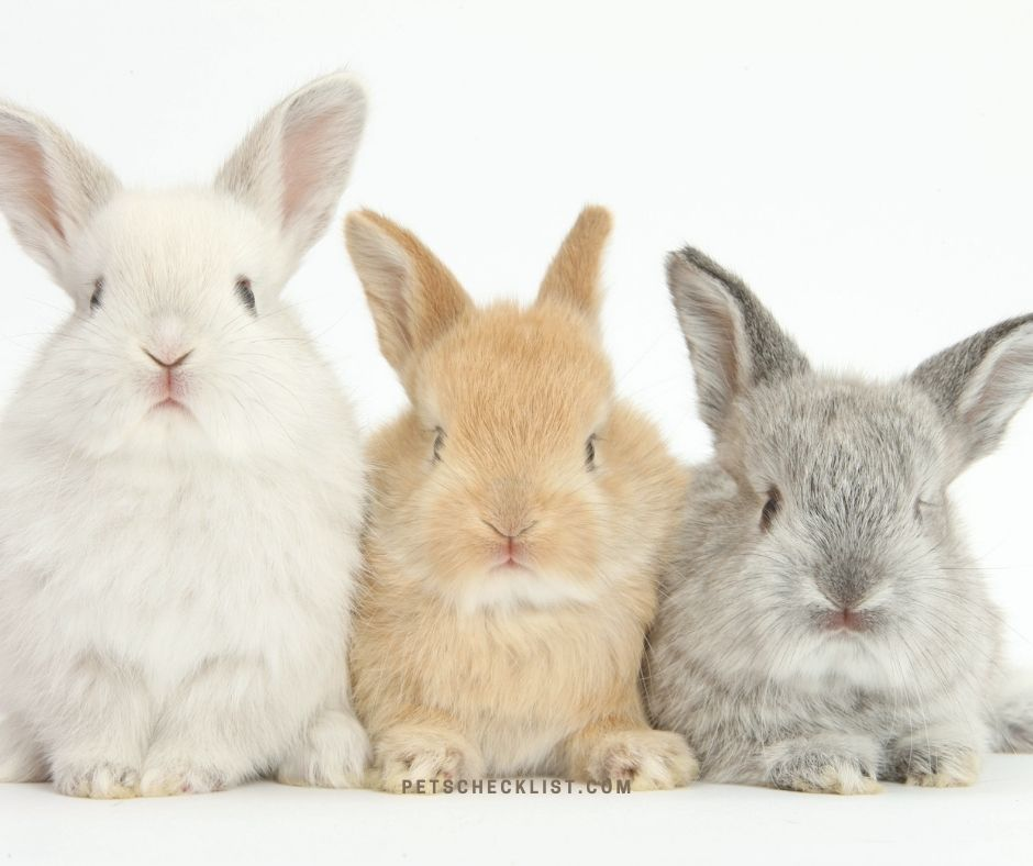 rabbits cute pets