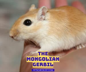 Read more about the article Mongolian Gerbils: Keeping and Caring for Pet Gerbils