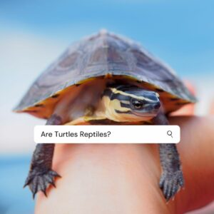 Are Turtles Reptiles Or Amphibians? Quick Answer with Pictures