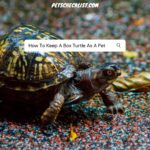 How To Keep A Box Turtle As A Pet (With Pictures)