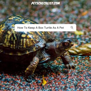 Read more about the article How To Keep A Box Turtle As A Pet (With Pictures)