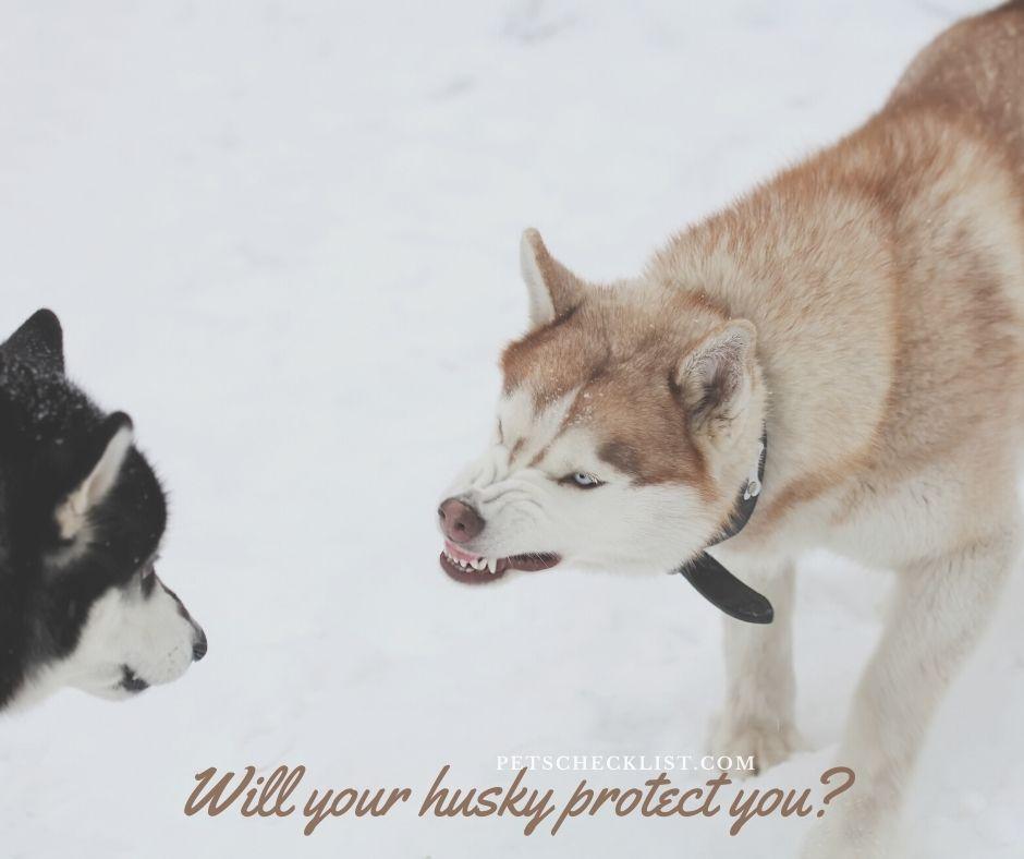 can a husky be a guard dog