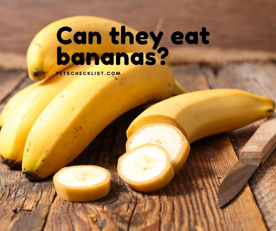 bananas for pets