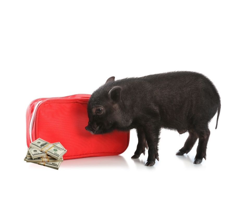 Cost of a Baby Mini Pig