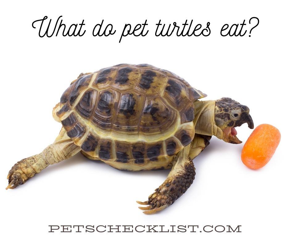 What Do Pet Turtles Eat? A Quick Guide With 3 Examples