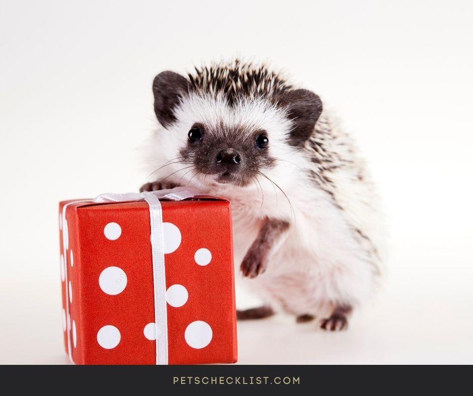 hedgehog hugging a gift