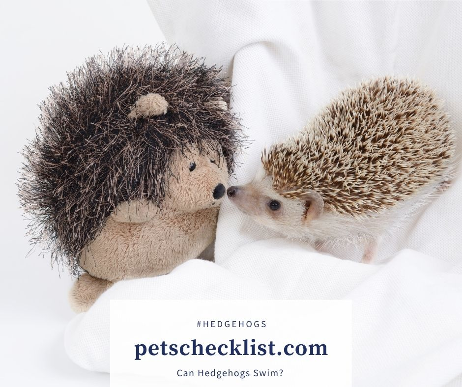 hedgehogs and stuffed toy