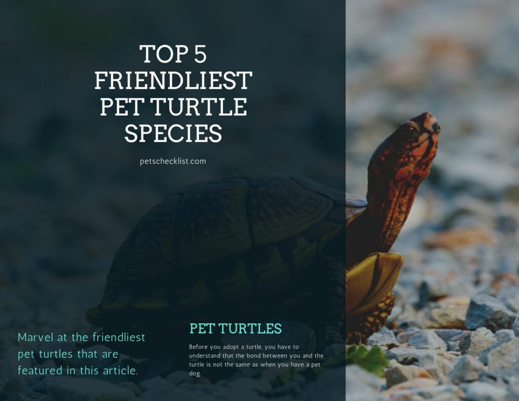 friendly pet turtle species