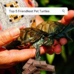 Pet Turtles: Top 5 Friendliest Turtle Species