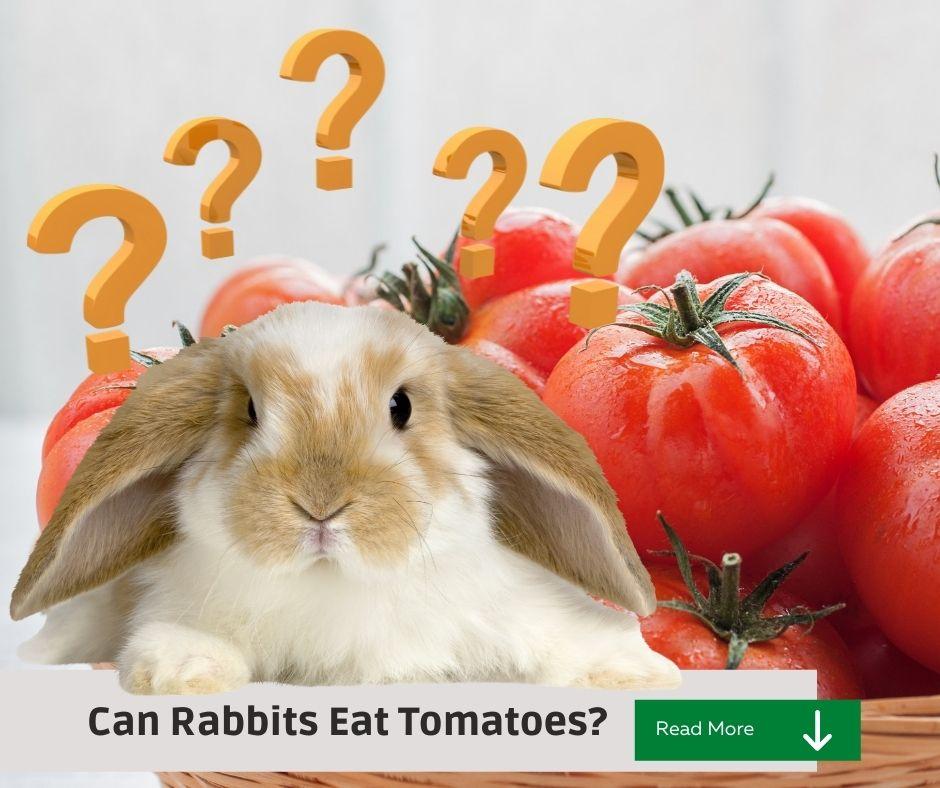 tomatoes and rabbits